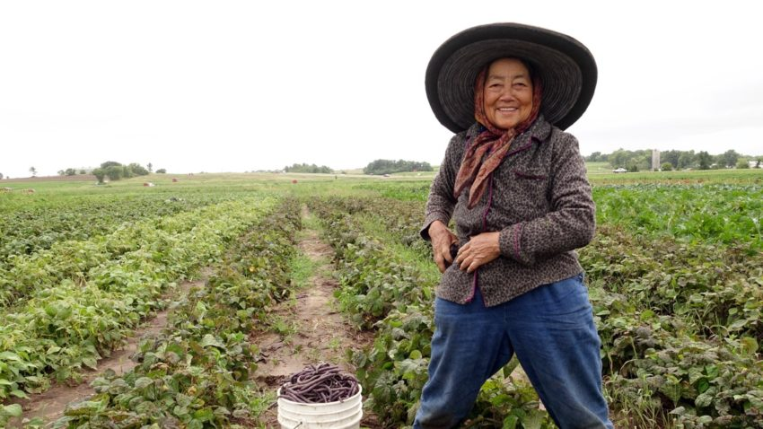 Image for Local Profile: Hmong American Farmers Association