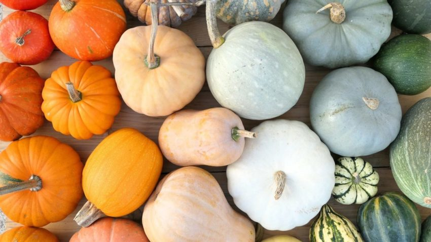 Image for Winter Squash at the Co-op