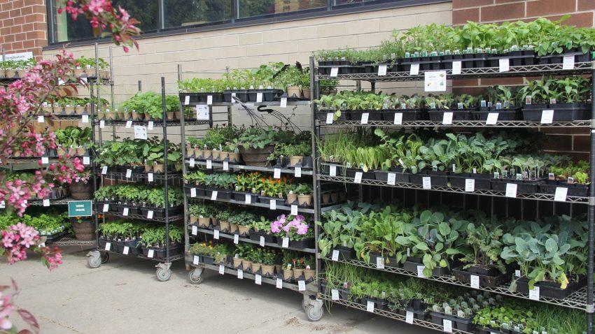 Image for 2021 Plant Sale