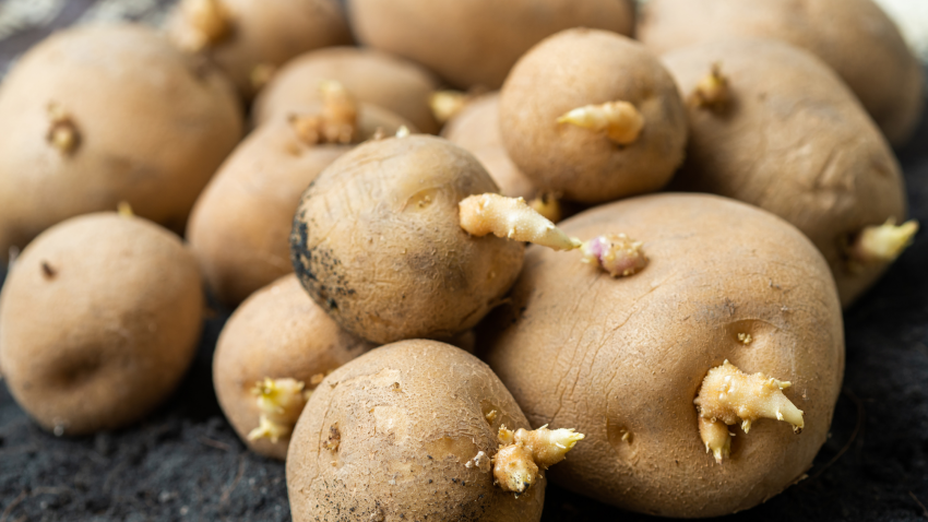 Image for Get Growing with Carter Farms Seed Potatoes