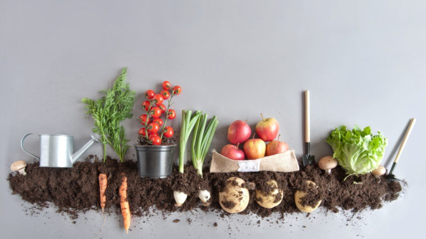 Image for Organics Composting Now Available