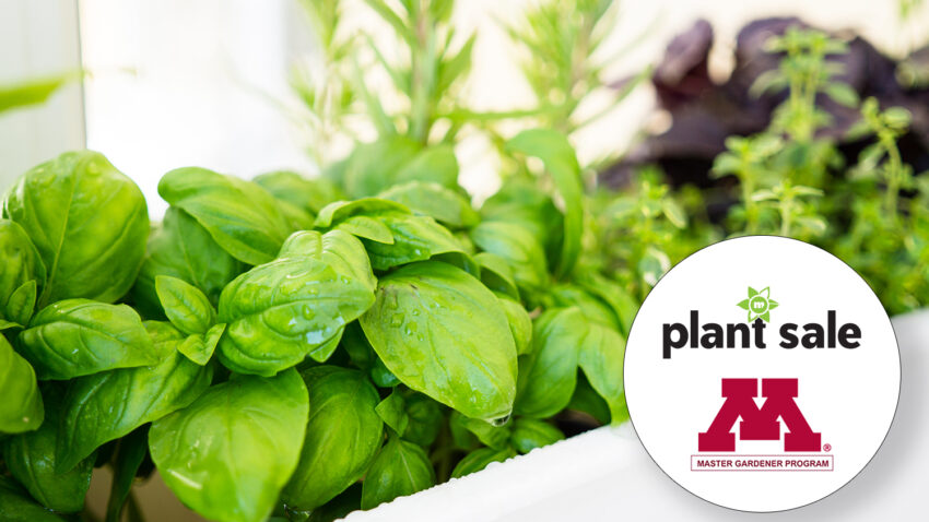 Image for Virtual Event – Plant Sale Tour & Herb Gardening