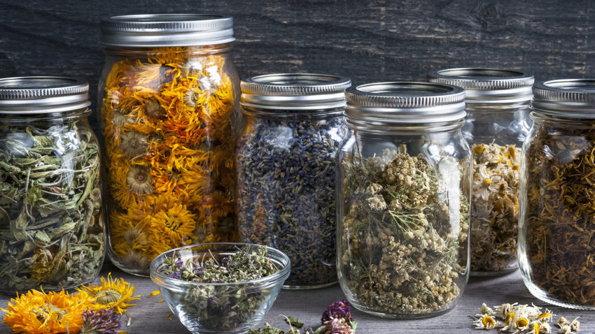 Image for Intro to Herbalism