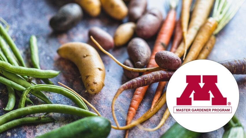 Image for Virtual Class – Food Preservation with Master Gardeners