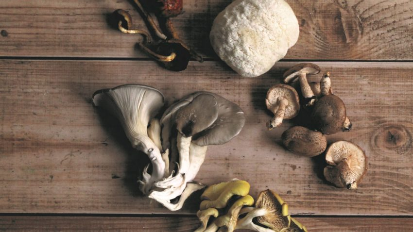Image for Explore the Versatility of Gourmet Mushrooms
