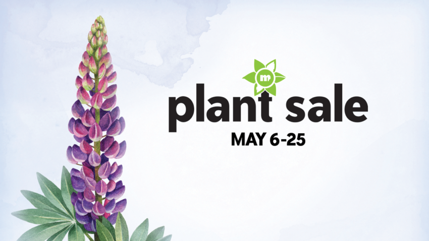 Image for 2020 Spring Plant Sale