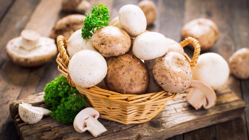 Image for Mushrooms for Food & Medicine